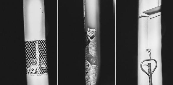 «Intrus», photographie, ©Caroline Perron, 2015, sur www.facebook.com/caroline.perron.photographies